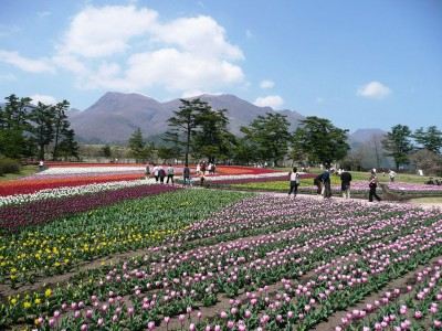春に向けてくじゅう花公園