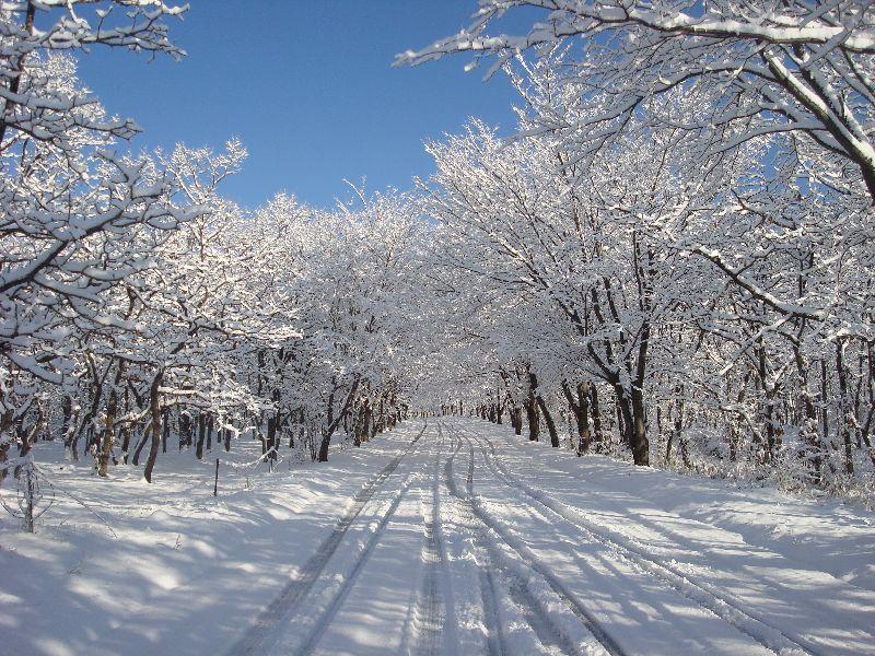 赤川登山入口の絶景山桜