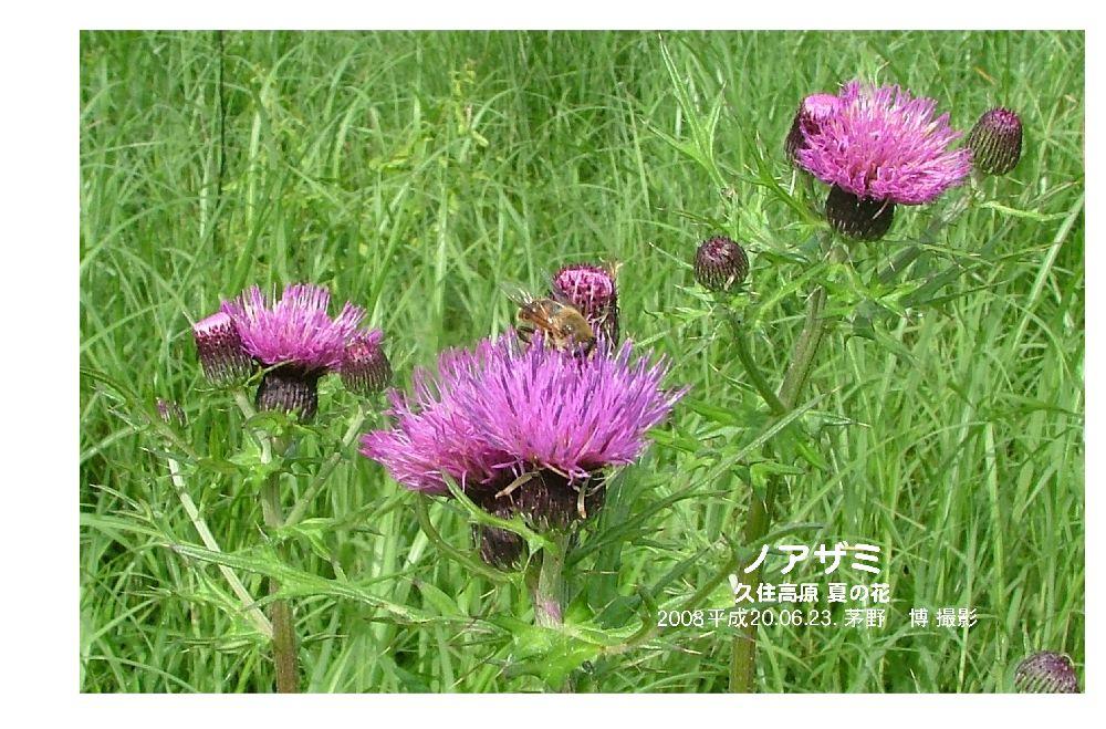 夏の野の花