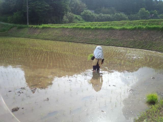 久住高原七里田温泉館 田植え体験募集中!!