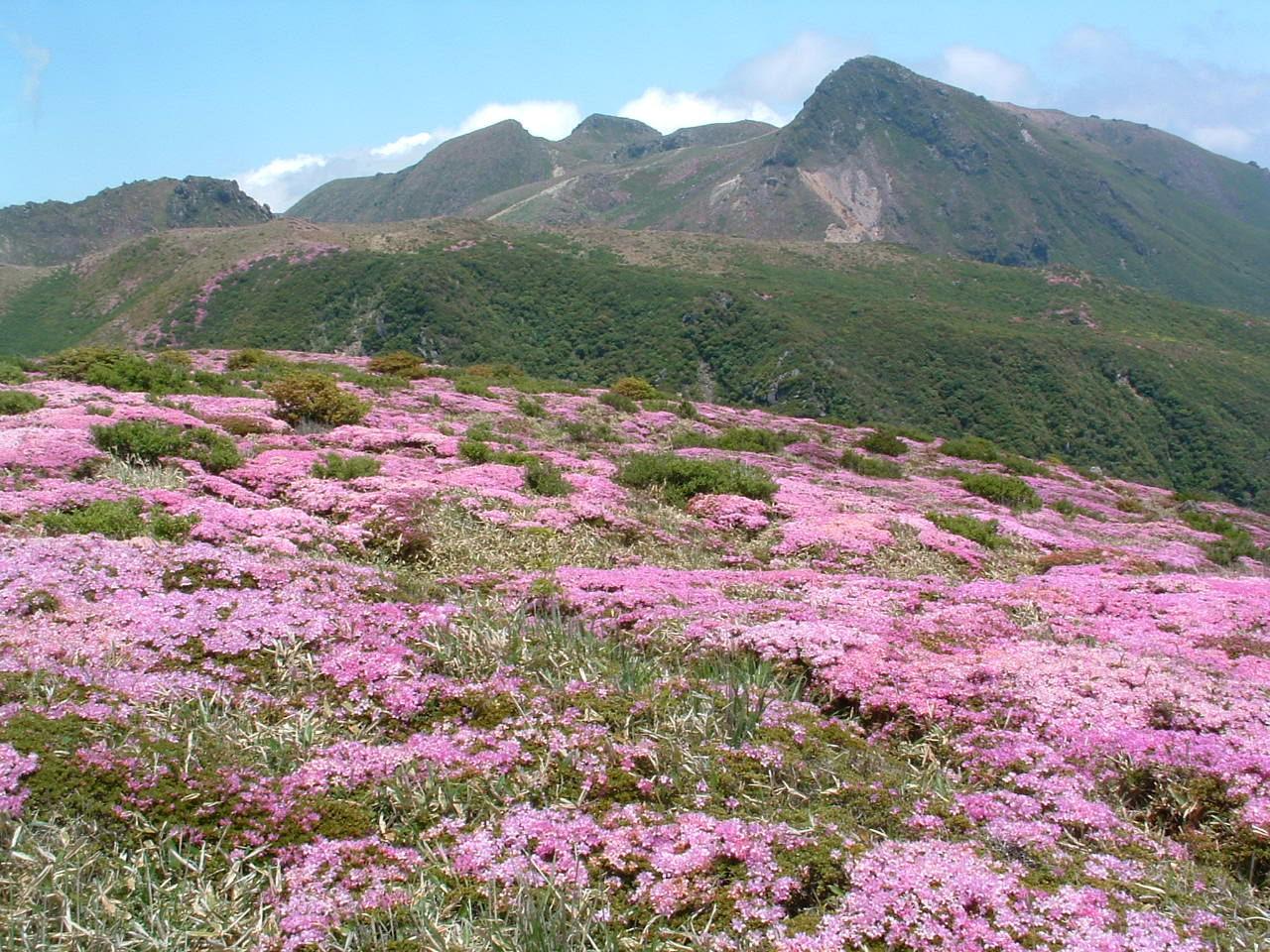 6月2日久住山系山開き
