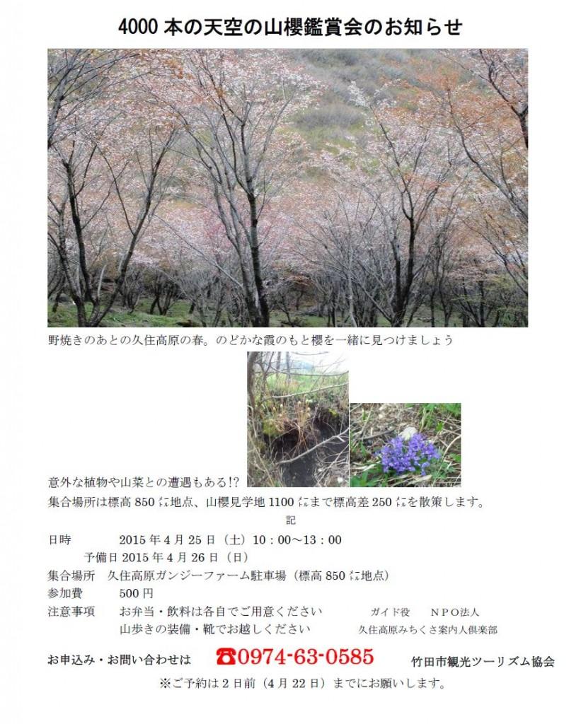 山桜鑑賞会2015