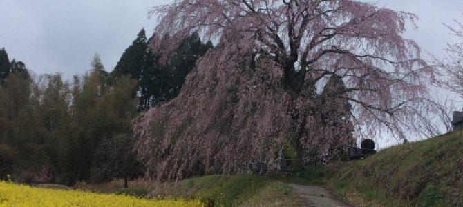春の匂いin久住高原。
